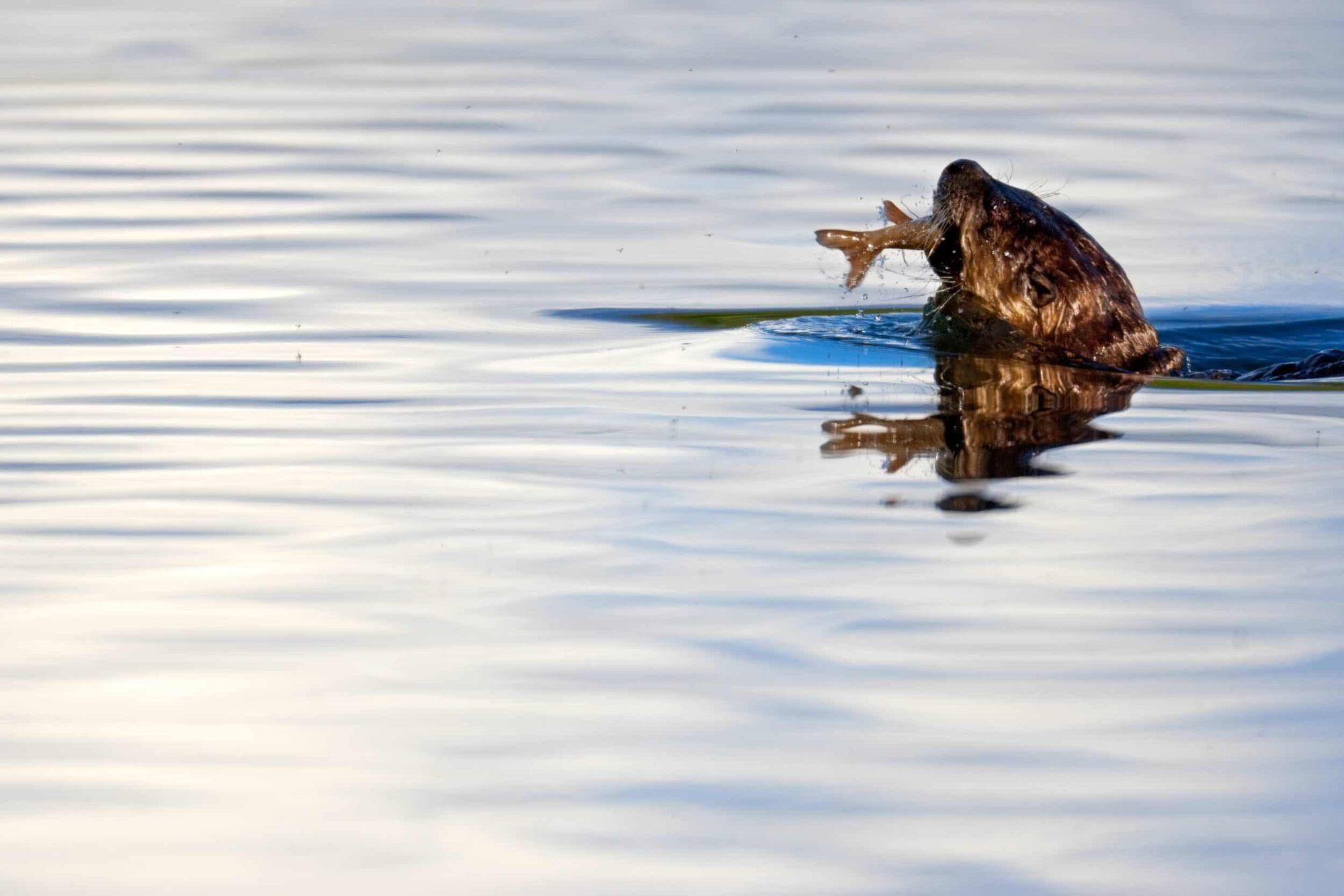 Teton Photo Adventures - River Otter Oxbow Wyoming