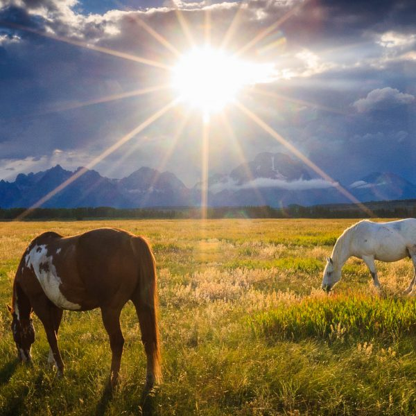 teton sunset horses limited-edition print by Jay Goodrich