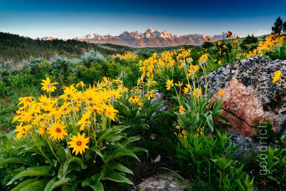 Reject a Photo post - Teton sunrise by Jay Goodrich