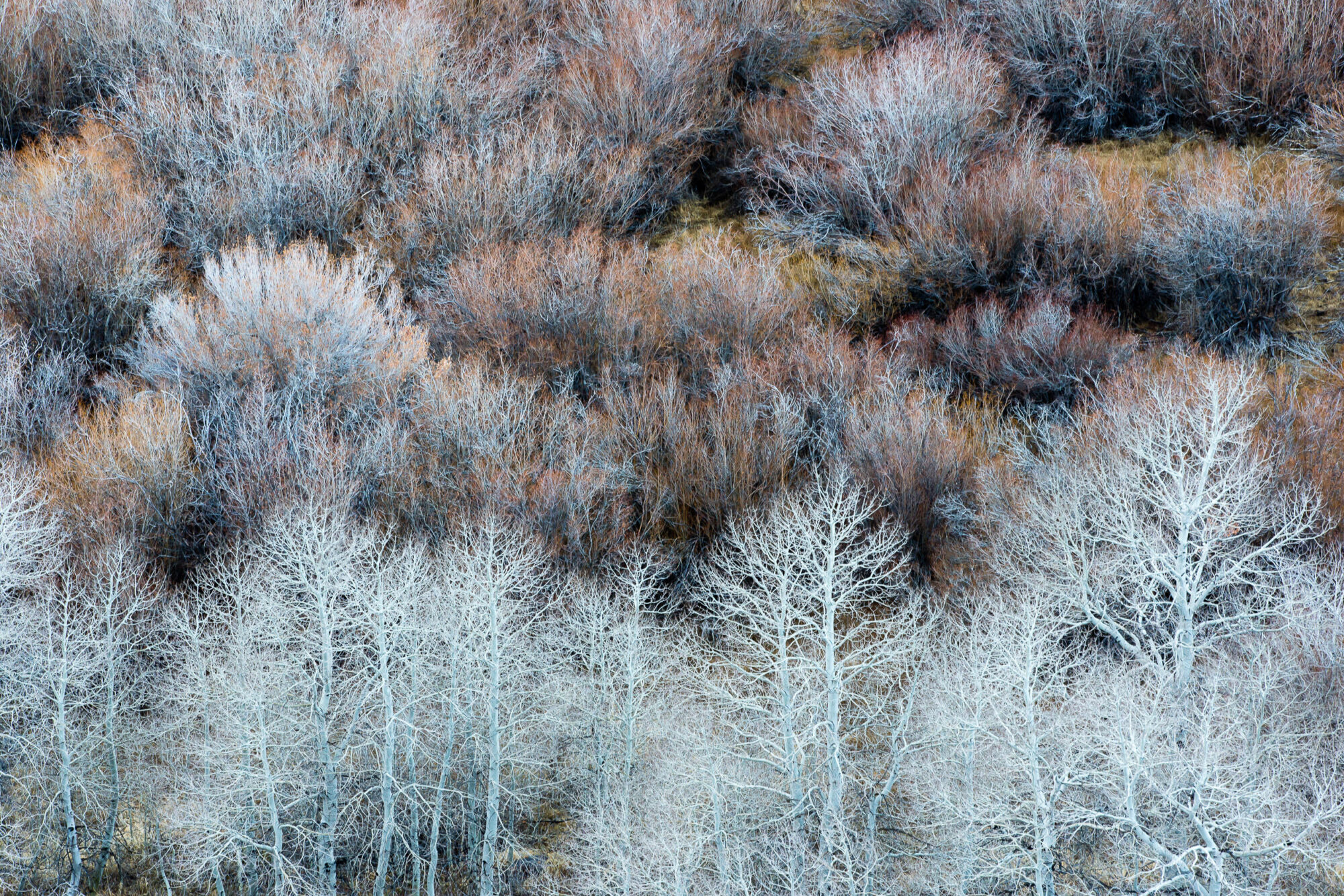 rule of thirds - aspens and willows Mono Lake, California by Jay Goodrich