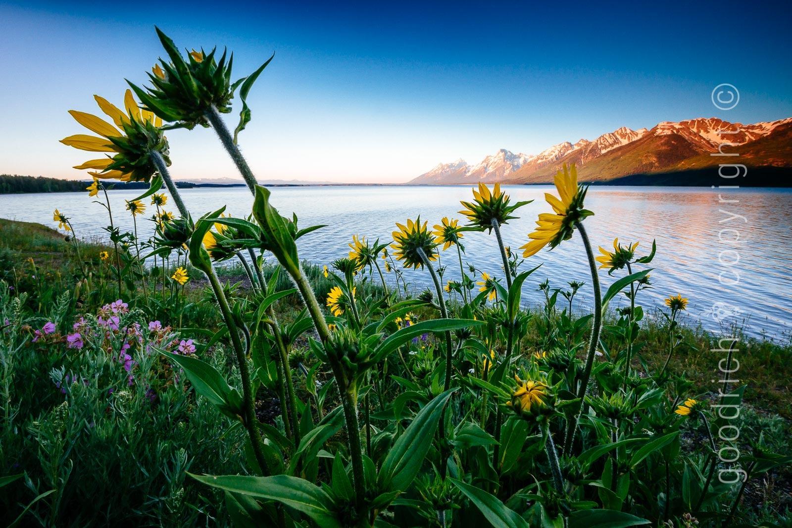 Photo Manipulation - Teton Landscape by Jay Goodrich
