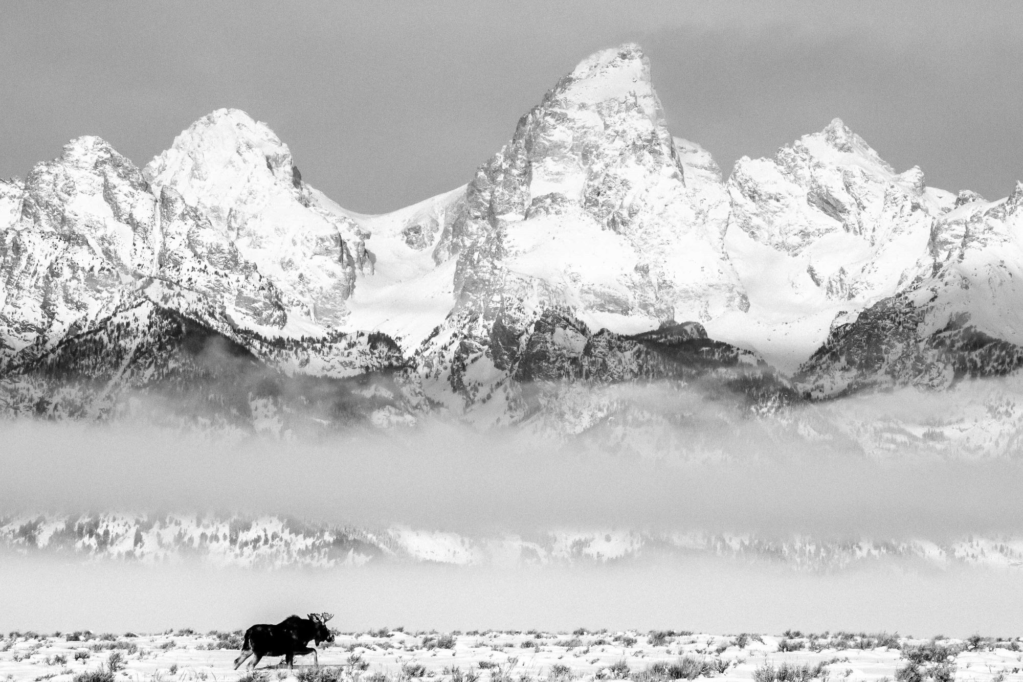 open edition prints - Moose and Tetons © Jay Goodrich