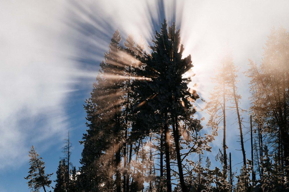 West Yellowstone Photo Adventure - Fog Yellowstone - Jay Goodrich