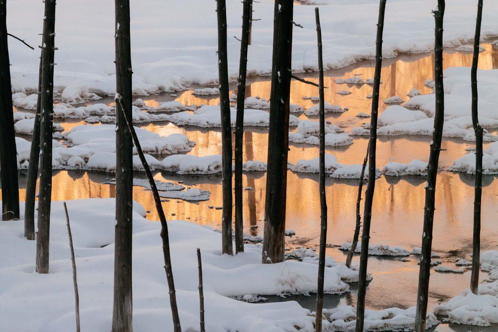 West Yellowstone Photo Adventure - Sunrise bobby sock trees Yellowstone - Jay Goodrich