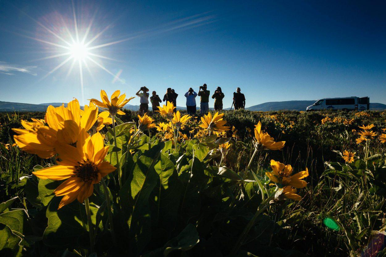 A Teton Teton Science Schools Spring wildlife tour stops to explore the balsamroot flowers