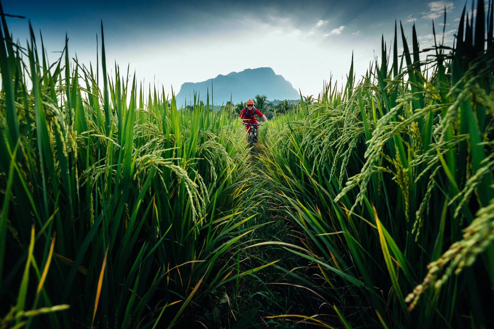 Andrew Whiteford rides through rice fields as the sun sets in the jungle near Chiang Dao, Thailand
