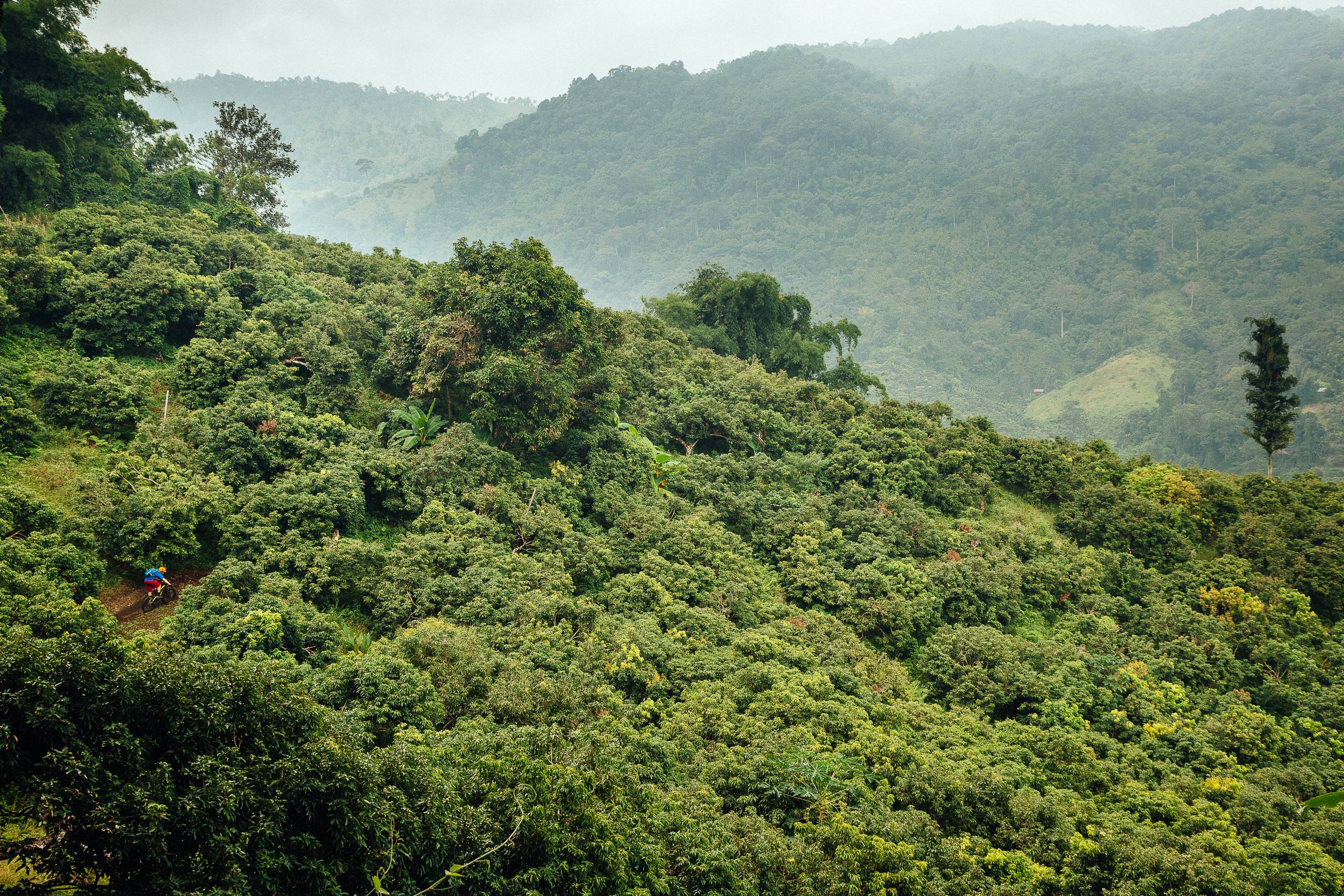 Andrew Whiteford rides single track through the jungle near Chiang Mai, Thailand